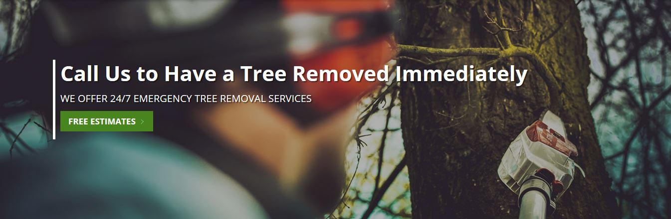 Gainesville Arborists Tree Service